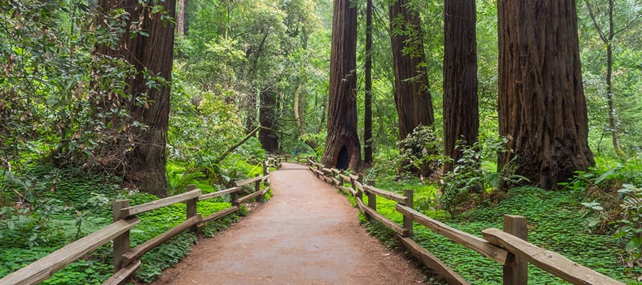 Walk through the stunning Muir Woods on your Pacific Coastal cruise
