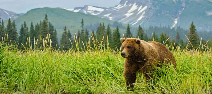 See wildlife on your Alaska Cruise