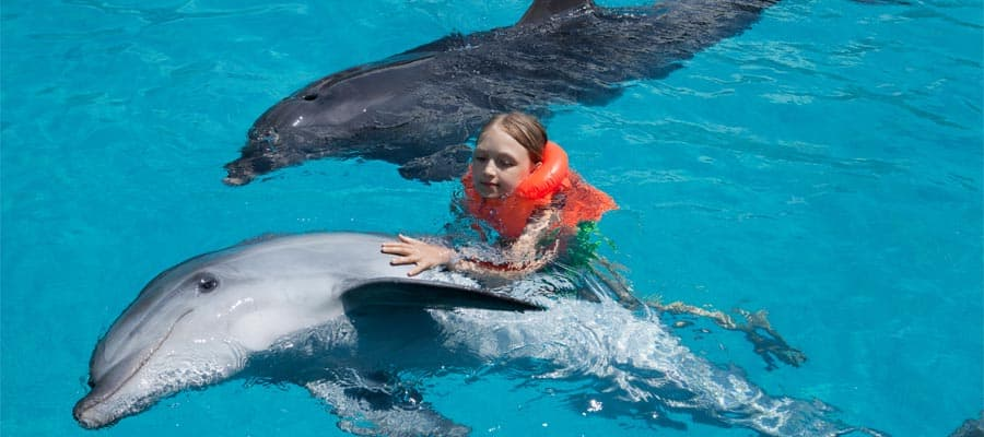 Swim with dolphins on our cruises from Los Angeles