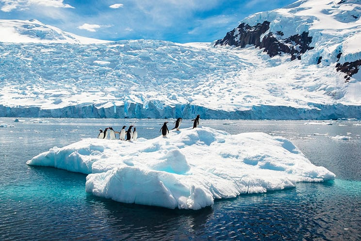 Witness icy-blue glaciers and unique wildlife in Antarctica