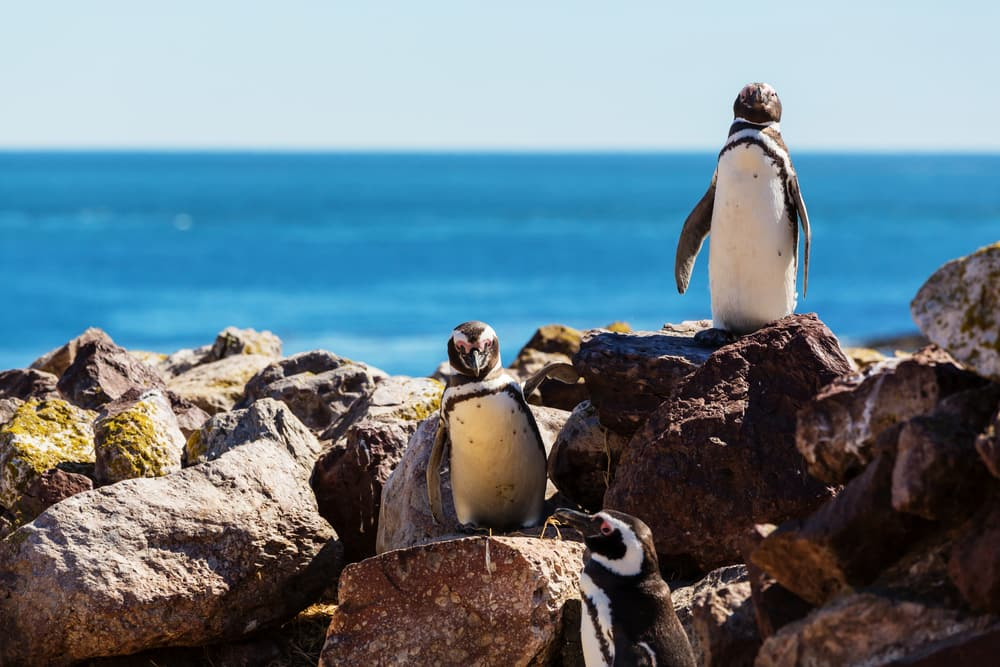 Get Up Close & Personal with the Penguins in Patagonia
