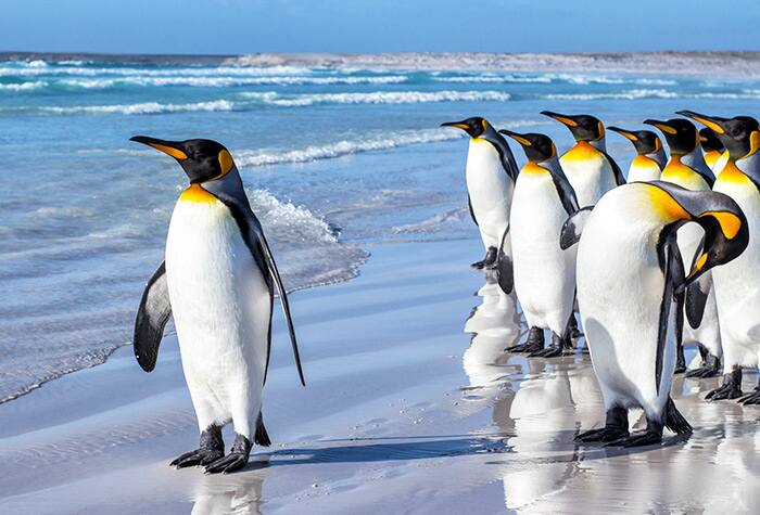 Cruise to Stanley, Falkland Islands